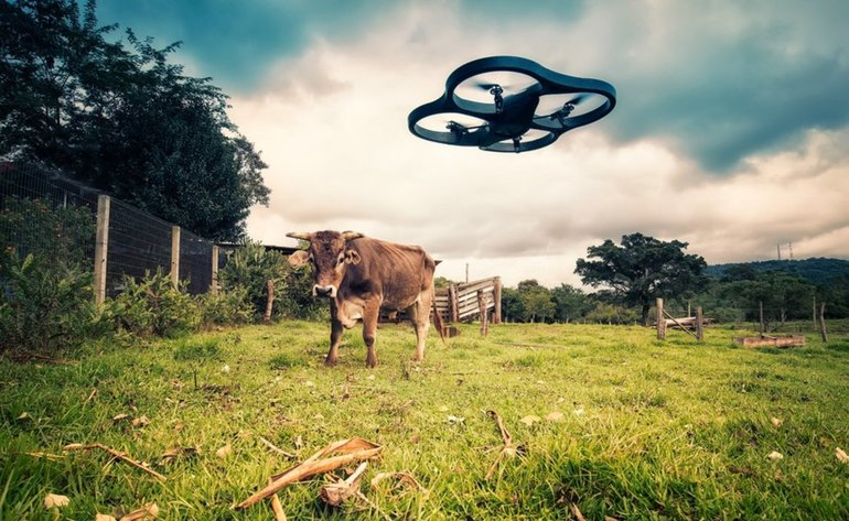 drone-and-cow