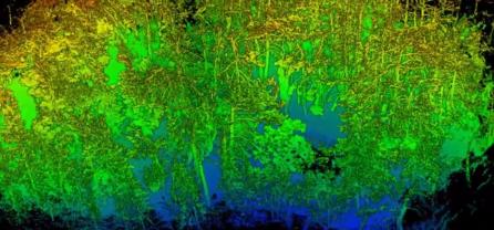 ZEB-REVO skenování lesa